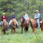 The horses you'll ride on our Montana pack trips are well trained, gentle, and trail wise.